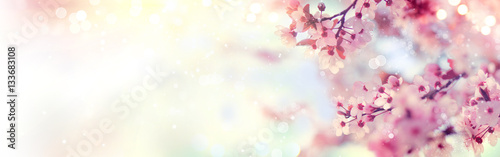 Wall mural Spring border or background art with pink blossom. Beautiful nature scene with blooming tree and sun flare