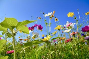 Grußkarte - Blumenwiese - Sommer