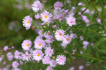 Beautiful spring flowers in the garden