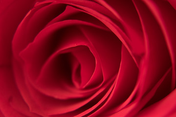 Extreme close up red rose bud