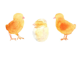 Baby chicens and chick hatching from an egg.