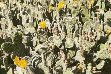 Variation of cacti plants
