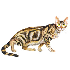 Watercolor portrait of cute Sokoke Forest Cat with dots, stripes isolated on white background. Hand drawn sweet home pet. Bright realistic colors. Greeting card design. Clip art. Add your text