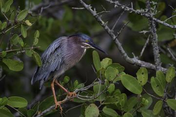 Near the nest...
