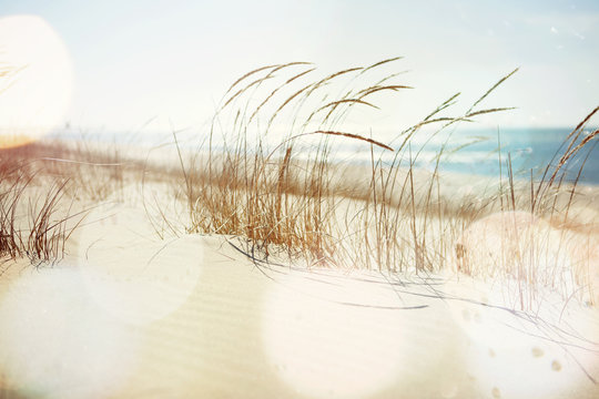 Beach Grass Blowing in the Wind
