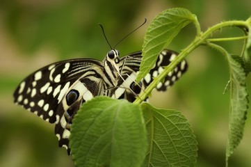 A butterfly on a leaf.