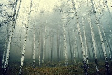 A misty forest in Bulgaria.