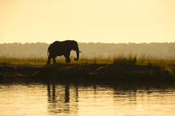 The silhouette of an elephant by a river in Chobe, Botswana.