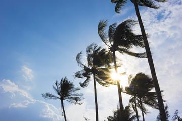 Coconut trees under brilliant sunlight