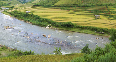 Asia rice field by harvesting season in Mu Cang Chai district, Yen Bai, Vietnam. Terraced paddy fields are used widely in rice, wheat and barley farming in east, south, and southeast Asia