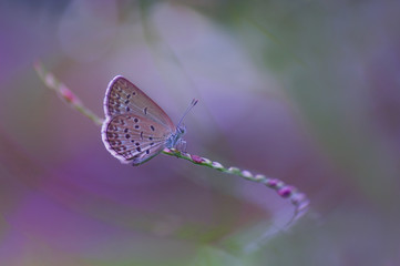 butterfly sitting on a curve twig with colorful background. image