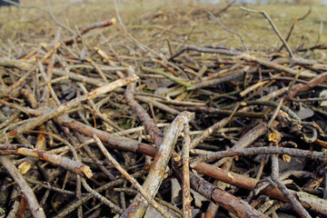 Pile of Fire Wood Branches