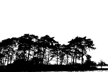 Realistic silhouettes of pine trees isolated on white (Vector illustration)