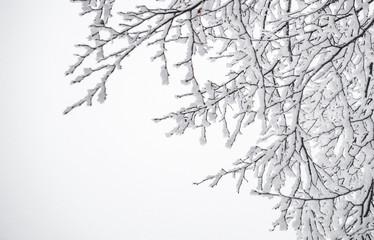 Морозная зимняя открытка. Заснеженный зимний сад