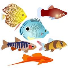Aquarium fish-3