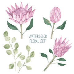 Watercolor botanical set. Hand drawn flower protea, eucalyptus leaves for tattoo