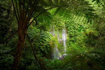 Beautuful waterfall in jungle tropic rain forest.