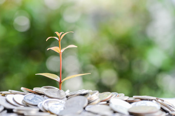 Plant is growing from saving money for saving money concept