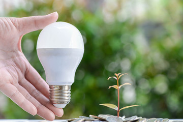 Woman hand is holding LED bulb with growing plant - Concept of saving energy