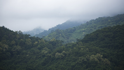 view of natural resource in tropical rain forest, Khao Yai National Park, Thailand