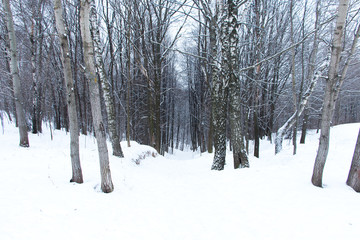 forest and snow winter
