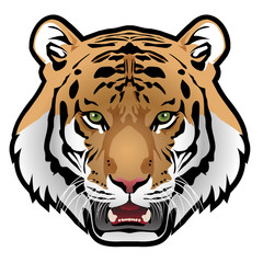Tiger head on white background vector illustration.