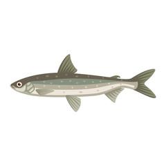 Coregonus albula vendance cisco fish