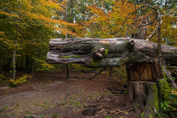 Totholz im Laubwald