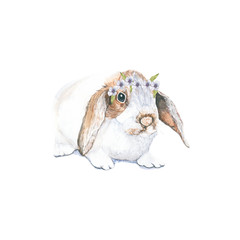 Rabbit and flowers. The beautiful hand-painted, animals, pastel color, print for Easter