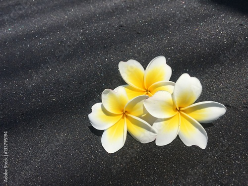 Fleur de tiar frangipanier id e d 39 image de fleur for Frangipanier jardiland