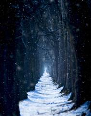 Snowy winter treeline scenery