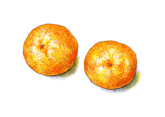 Tangerines fruits are isolated on a white background. Сolor sketch felt-tip pens. Tropical fruit. Healthy food. Handwork. Fast schematical drawing