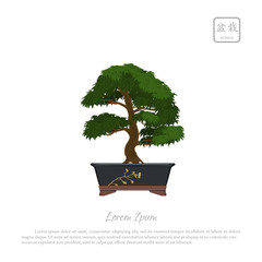 Bonsai tree in pot on white background.