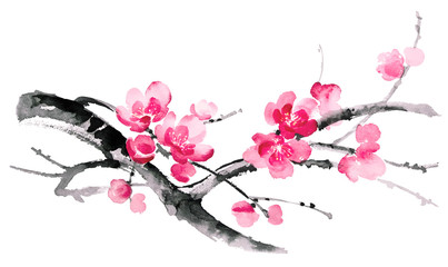 Ink illustration of blooming branches of cherry. Sumi-e, u-sin, gohua painting style. Silhouette made up of brush strokes isolated on white background.