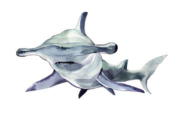 Watercolor hammerhead shark. Illustration isolated on white background. For design, prints, background, t-shirt
