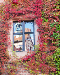 Reflection of the ancient house in the window on the wall , ivy-