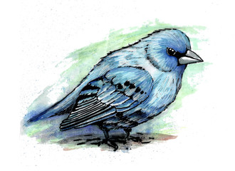 Bird painted in watercolor. The world of birds.