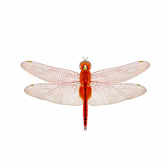 Dragonfly isolated with white background.