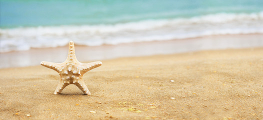 Starfish shell on the beach. Copy space for your text.