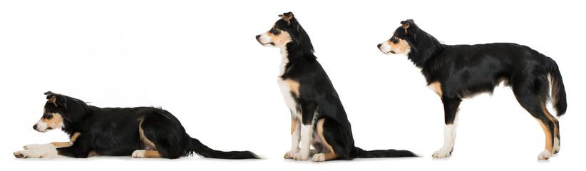 Hundeschule Platz - Sitz - Steh