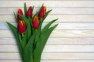 Beautiful red tulips on white wooden table
