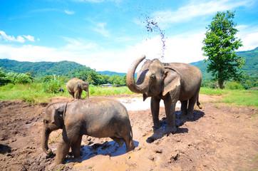 Elefanten spielen in einer Schlammpfütze