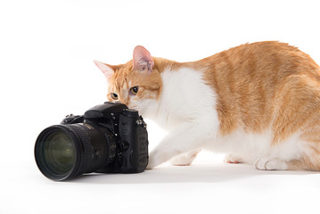 yellow cat taking photos witn a dslr camera on a white background