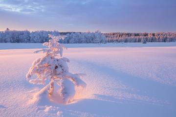 Garden Poster Weiße Winterlandschaft an einem klaren Wintertag im Erzgebirge