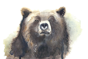 Bear head watercolor painting illustration isolated on white background