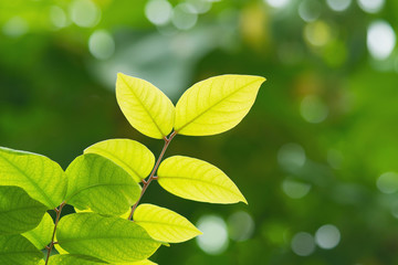 Green leaves in sunny day