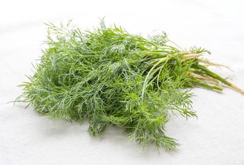 Fresh green dill