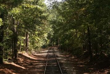 Train tracks through forest 1
