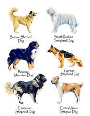 Shepherd Dogs. Gouache hand drawn illustration.