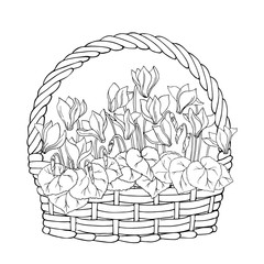 vector contour sketch illustration of flowers cyclamen